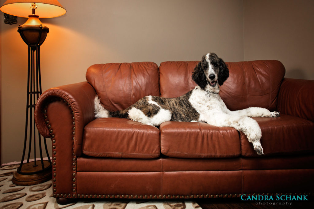 Pet Photography by Candra Schank Photography