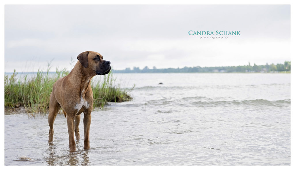 Pet Photography by Candra Schank Photography. Candra Schank Owen Sound Pet Photographer. Candra Schank Grey and Bruce Pet Photographer.