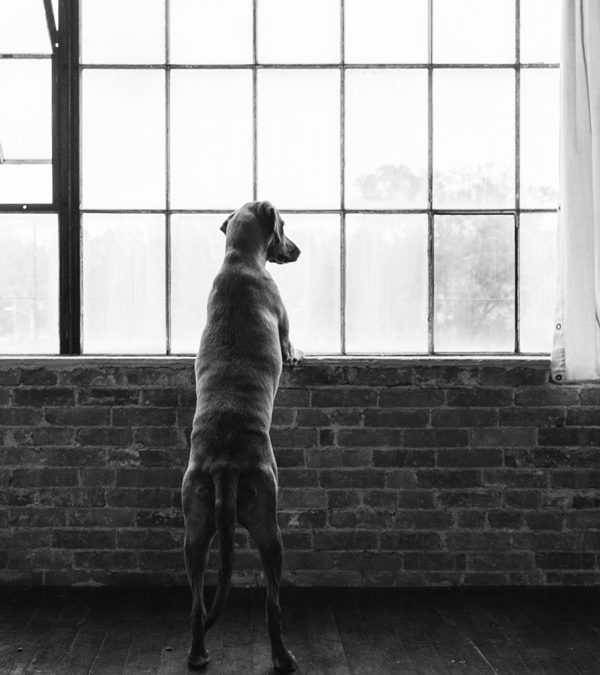 Pet Photography / Hazel  / Candra Schank Pet Photography
