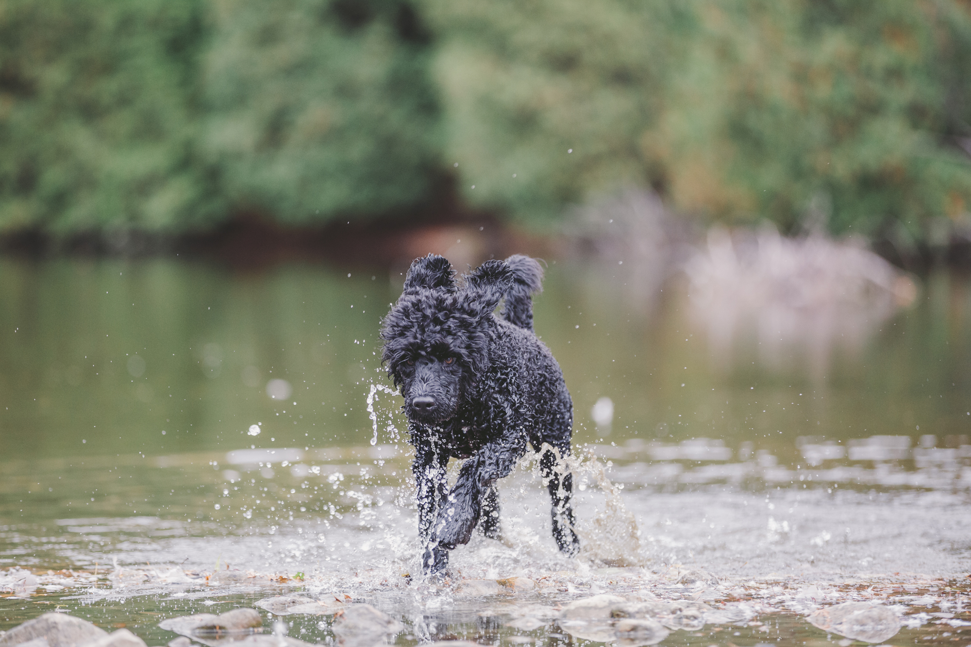 Wow, how do I photograph my dog running?