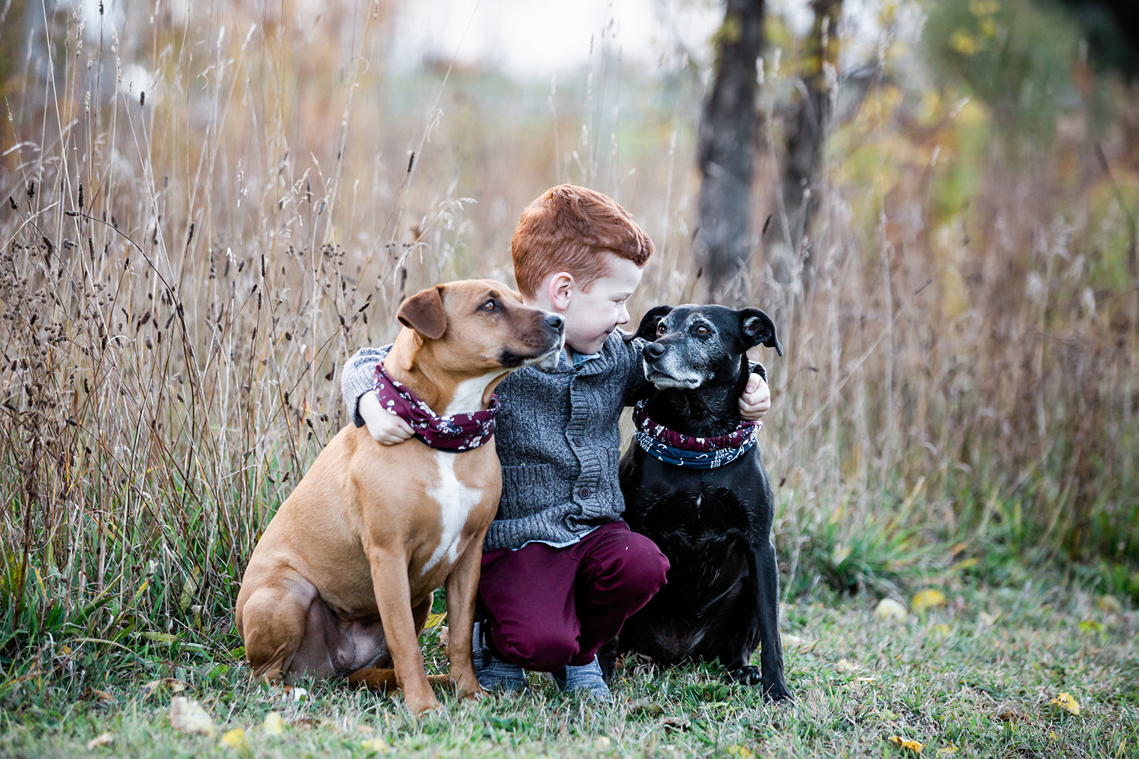 A young boy and his two dogs in the fall